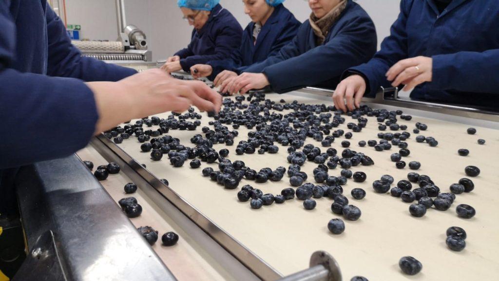 seizoensarbeiders Roemeense Agrigarant